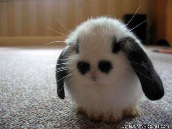 Sad_Bunny