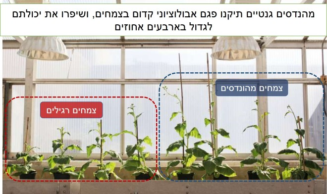 צמחים מהונדסים.jpg