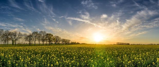 מהנדסים גנטיים מתקנים פגם אבולוציוני קדום בצמחים – ומשפרים את היבול בארבעיםאחוזים