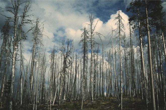 forest-593162.jpg