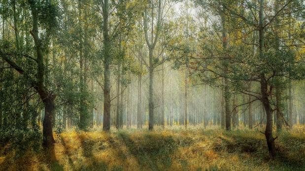 עתיד היערות: קריסה אותקווה?