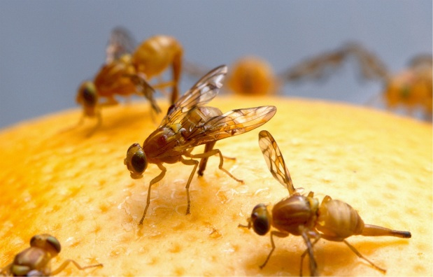 אוואטארים חייתיים, או – איך זכה חולה סרטן לעזרה מ- 300,000זבובים